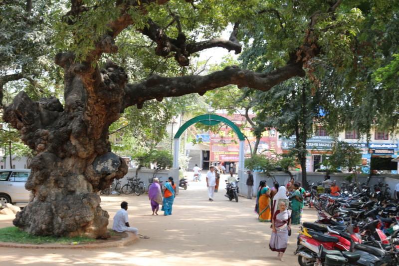 インド・ティルバンナマライ・ラマナアシュラム